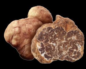 tuber-albidum
